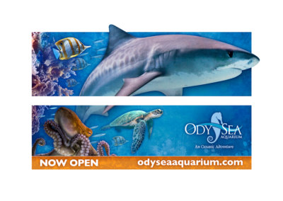 Billboard Design - Created with Adobe Creative Suite by CJ Mascarelli for OdySea Aquarium.